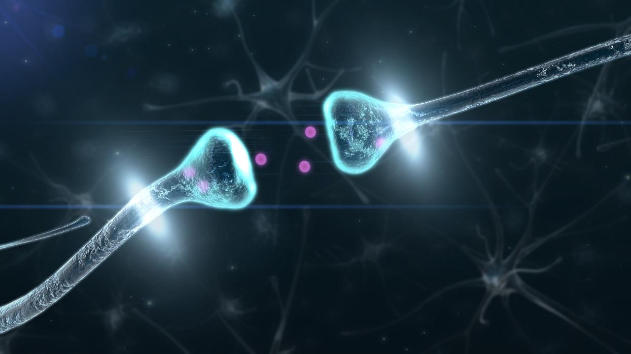 แอลฟา-แล็คตัลบูมิน, นมแม่, น้ำนม, ลูกฉลาด, การทำงานของสมอง, โปรตีน, สารอาหาร, พัฒนาการ, ลูกแรกเกิด, 1 ขวบ