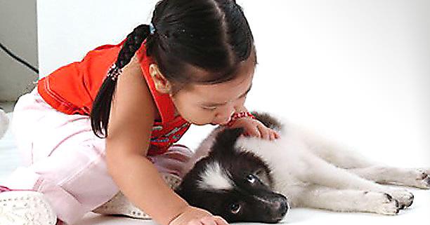 สุนัข,ข้อควรระวังในการเลี้ยงสุนัข,สัตว์เลี้ยง,หมากัด,สุนัขกัด,ลูกถูกสุนัขกัด