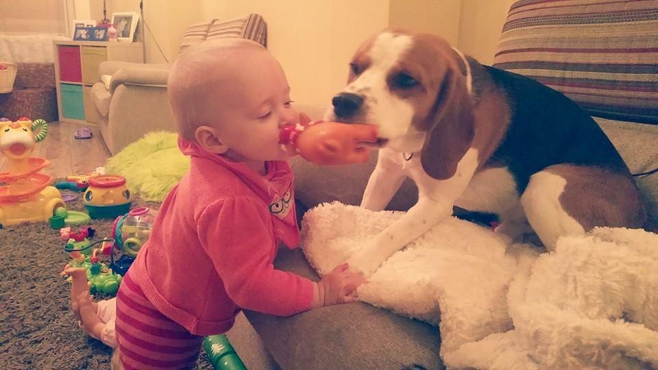คลิปน้องหมาแสนรู้ช่วยคุณแม่เลี้ยงน้อง,คลิปหมาเลี้ยงเด็ก,คลิปเด็กกับหมา,คลิปหมาช่วยเลี้ยงเด็กทารก,คลิปหมาแสนรู้,คลิปเด็กน่ารัก,คลิปเด็กทารก,คลิปครอบครัว