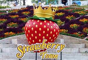 เที่ยว, ครอบครัว, วันหยุด, ถ่ายรูป, สตรอว์เบอร์รี่ ทาวน์, ระยอง, ผจญภัย, Strawberry Town, เครื่องเล่น, ให้อาหารสัตว์