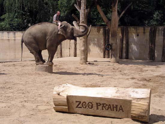 play zone, zoo, สวนสัตว์, สวนสัตว์ที่ดีที่สุดในโลก,สถานที่ท่องเที่ยว,ท่องเที่ยว,