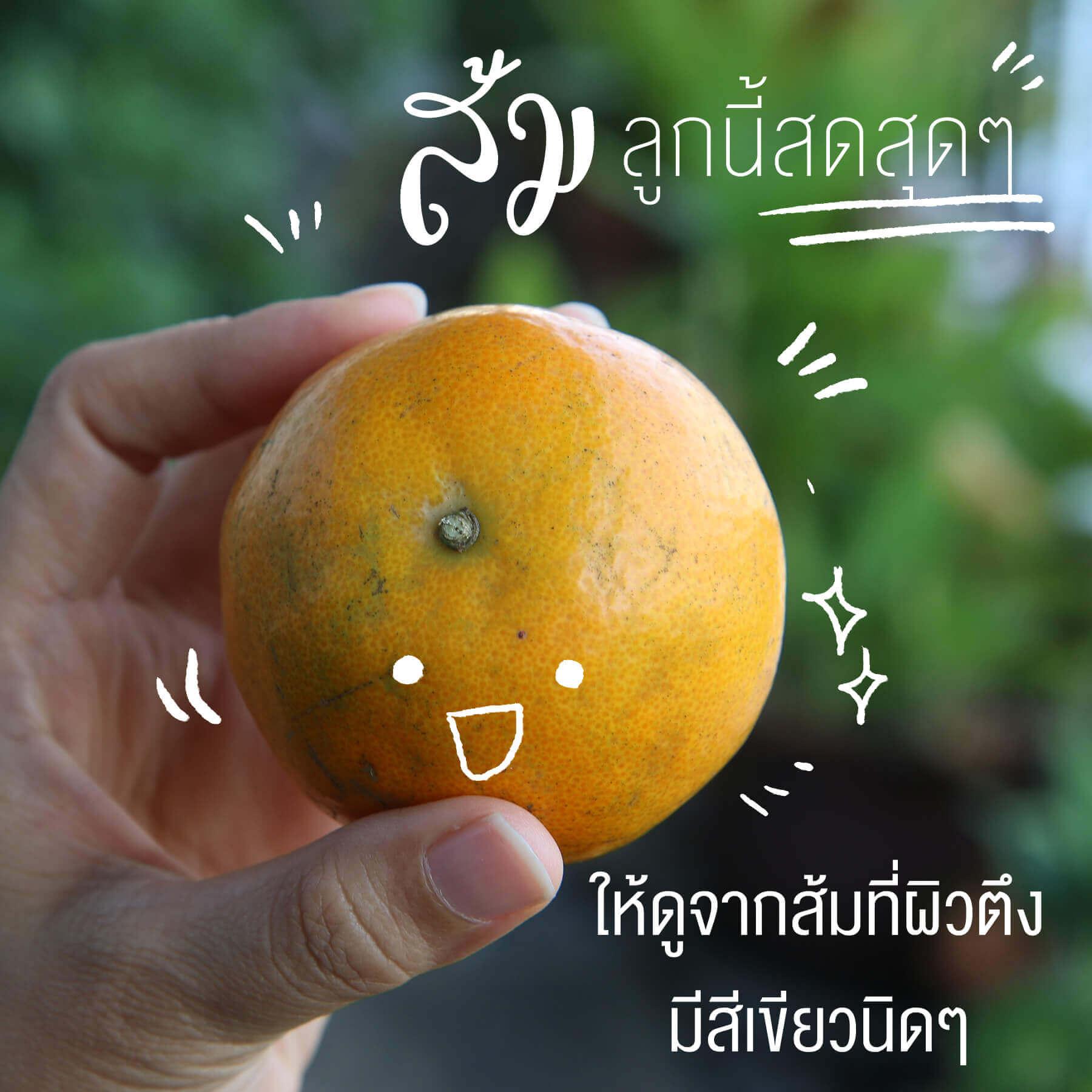 เลือกส้มยังไงให้หวานฉ่ำ, ส้มลูกหวานๆ, วิธีเลือกส้ม, ส้มเปรี้ยว